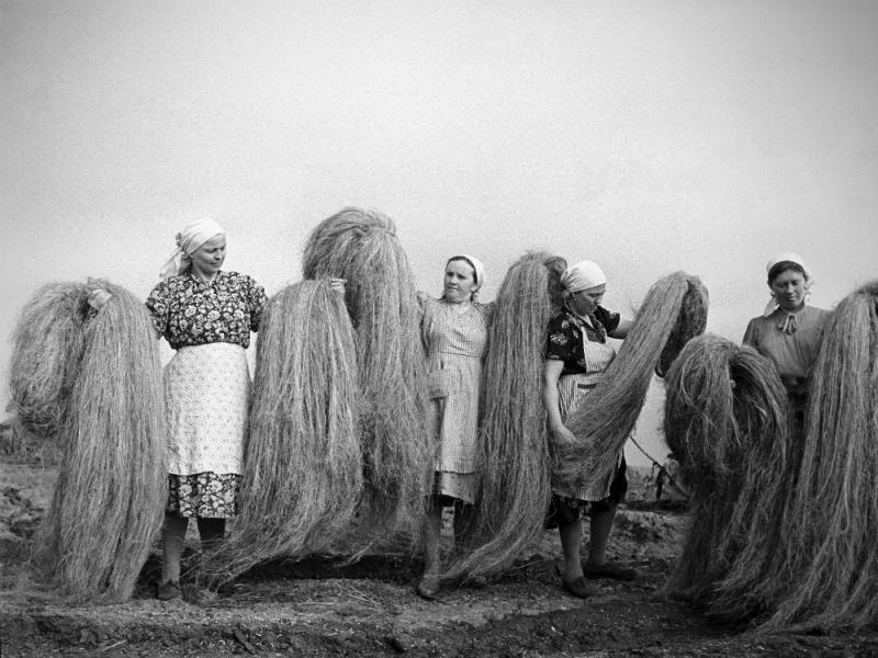 Олег Сизов/ТАСС, сортировщицы пенькозавода села Каменовки, Курская область, 1964 год